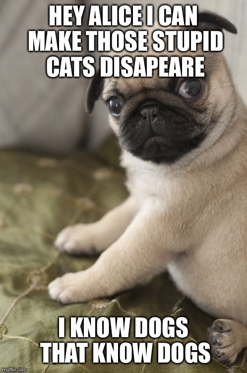 Angry Pug | HEY ALICE I CAN MAKE THOSE STUPID CATS DISAPEARE I KNOW DOGS THAT KNOW DOGS | image tagged in angry pug | made w/ Imgflip meme maker