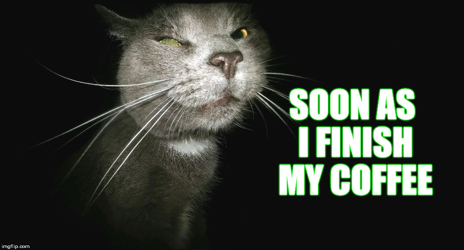 Stalker Cat | SOON AS I FINISH MY COFFEE | image tagged in stalker cat | made w/ Imgflip meme maker