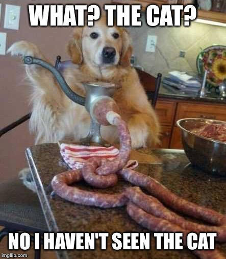 Guilty dog | WHAT? THE CAT? NO I HAVEN'T SEEN THE CAT | image tagged in dog,cat,guilty | made w/ Imgflip meme maker