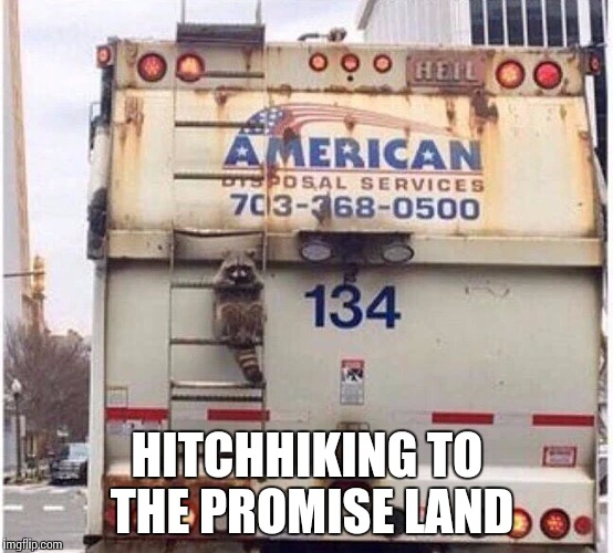 Smart raccoon | HITCHHIKING TO THE PROMISE LAND | image tagged in raccoon,trash truck,hitchhiking | made w/ Imgflip meme maker