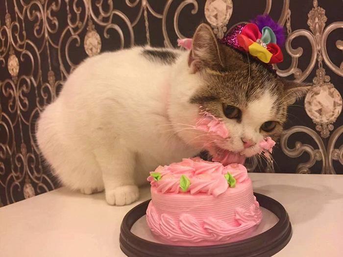 High Quality Cat Cake Blank Meme Template