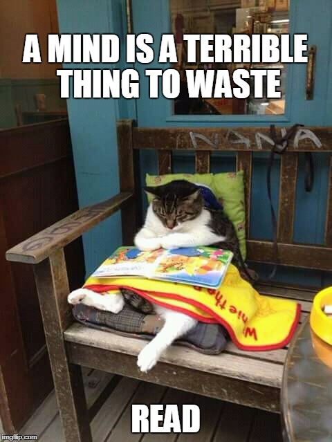 literate cat | A MIND IS A TERRIBLE THING TO WASTE READ | image tagged in cat reading,cats are awesome,read,literacy,reading | made w/ Imgflip meme maker