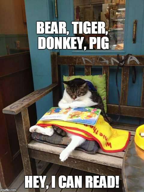 literate cat | BEAR, TIGER, DONKEY, PIG HEY, I CAN READ! | image tagged in cat reading,winnie the pooh,reading | made w/ Imgflip meme maker