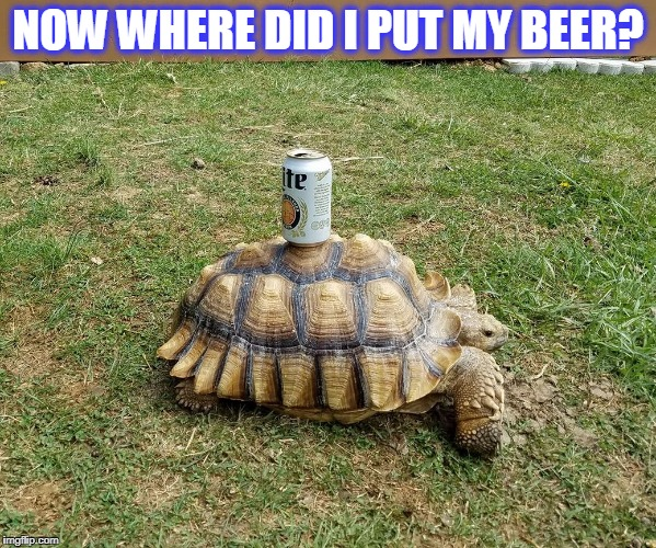 beer | NOW WHERE DID I PUT MY BEER? | image tagged in now where'd i put my beer,turtles | made w/ Imgflip meme maker