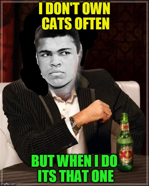 I DON'T OWN CATS OFTEN BUT WHEN I DO ITS THAT ONE | made w/ Imgflip meme maker
