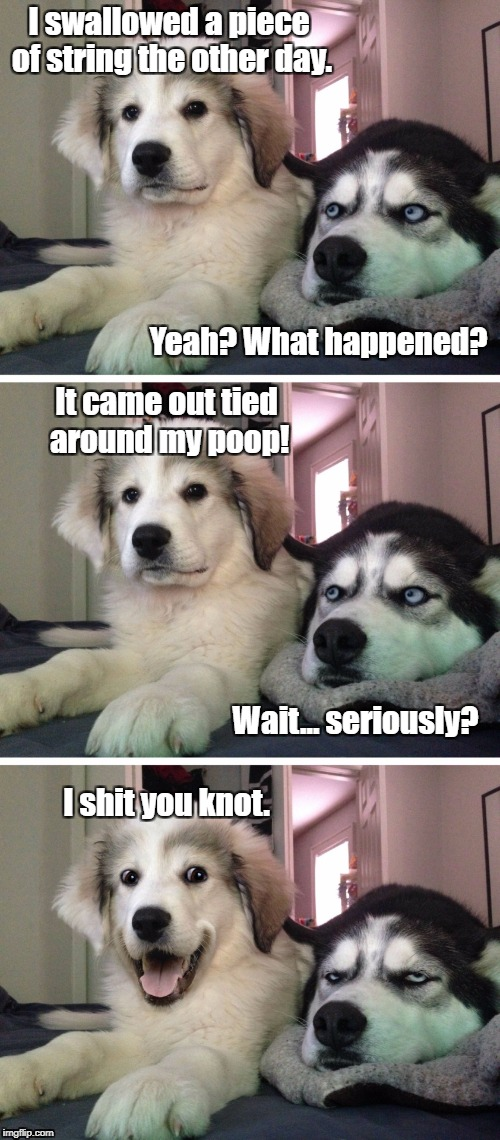 It all works out in the end | I swallowed a piece of string the other day. Yeah? What happened? It came out tied around my poop! Wait... seriously? I shit you knot. | image tagged in bad pun dogs,knot | made w/ Imgflip meme maker