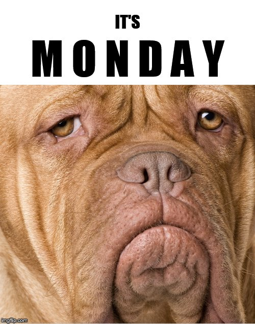 It's Monday y'all! | IT'S M O N D A Y | image tagged in mondays,monday,monday face,i hate mondays,funny memes,dog | made w/ Imgflip meme maker