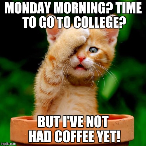 Monday Morning and it's time to go | MONDAY MORNING? TIME TO GO TO COLLEGE? BUT I'VE NOT HAD COFFEE YET! | image tagged in kitten facepalm | made w/ Imgflip meme maker