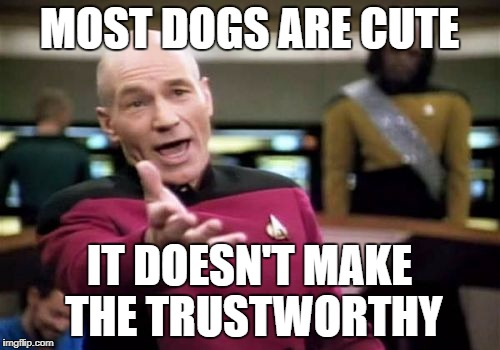 Picard Wtf Meme | MOST DOGS ARE CUTE IT DOESN'T MAKE THE TRUSTWORTHY | image tagged in memes,picard wtf | made w/ Imgflip meme maker