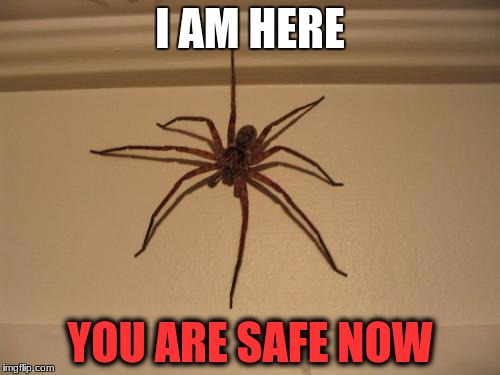 Scumbag Spider | I AM HERE YOU ARE SAFE NOW | image tagged in scumbag spider | made w/ Imgflip meme maker
