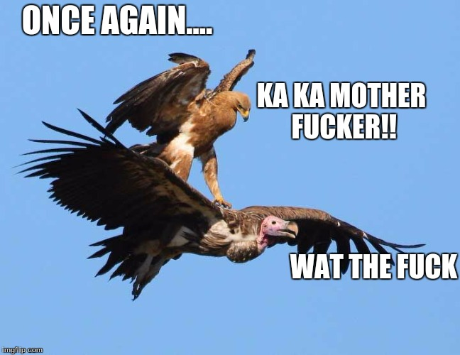gangster bird prt 2 | KA KA MOTHER F**KER!! WAT THE F**K ONCE AGAIN.... | image tagged in hawk | made w/ Imgflip meme maker