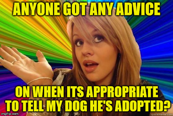 Its been a year, should I wait any longer? | ANYONE GOT ANY ADVICE ON WHEN ITS APPROPRIATE TO TELL MY DOG HE'S ADOPTED? | image tagged in blonde bitch meme,memes,dumb blonde,dog,adopted,advice | made w/ Imgflip meme maker