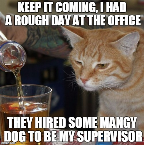 don't we all know the feeling? | KEEP IT COMING, I HAD A ROUGH DAY AT THE OFFICE THEY HIRED SOME MANGY DOG TO BE MY SUPERVISOR | image tagged in rough day cat,memes,cat,alcohol,cats,work | made w/ Imgflip meme maker