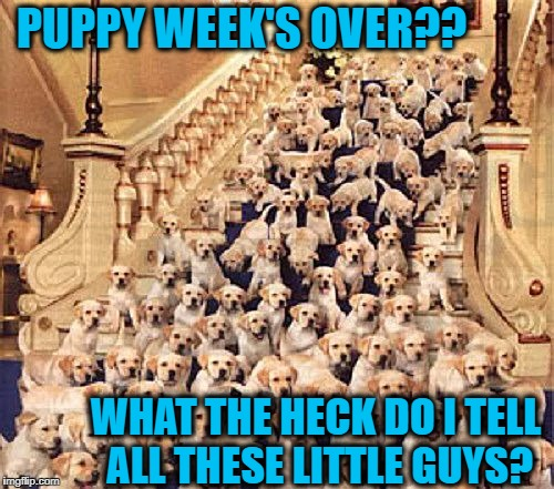 Heartbroken they will surely be! | PUPPY WEEK'S OVER?? WHAT THE HECK DO I TELL ALL THESE LITTLE GUYS? | image tagged in puppy week | made w/ Imgflip meme maker