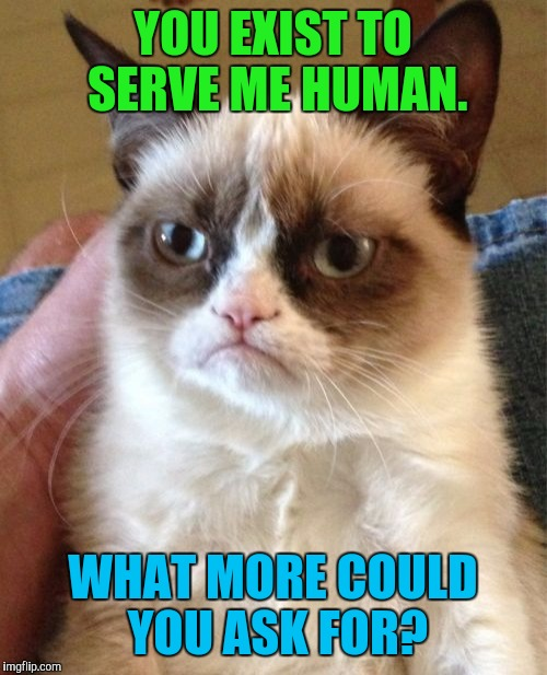 CATTITUDE. :D | YOU EXIST TO SERVE ME HUMAN. WHAT MORE COULD YOU ASK FOR? | image tagged in funny,grumpy cat,cats,animals,pets,memes | made w/ Imgflip meme maker