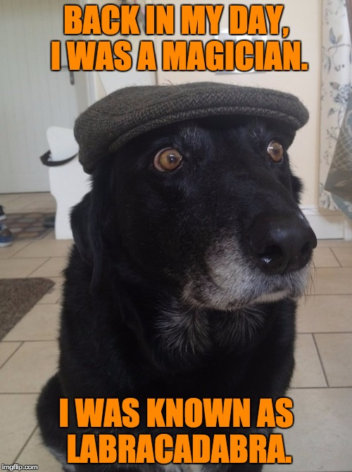 Back In My Day Dog | BACK IN MY DAY, I WAS A MAGICIAN. I WAS KNOWN AS LABRACADABRA. | image tagged in back in my day dog | made w/ Imgflip meme maker