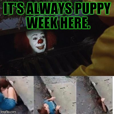 YOU CAN NEVER HAVE TOO MUCH OF A GOOD THING. ;-) | IT'S ALWAYS PUPPY WEEK HERE. | image tagged in funny,pennywise in sewer,animals,dogs,memes,puppy week | made w/ Imgflip meme maker