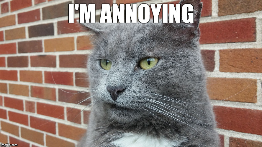 Evil Cat | I'M ANNOYING | image tagged in evil cat | made w/ Imgflip meme maker