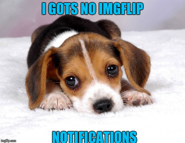 I GOTS NO IMGFLIP NOTIFICATIONS | image tagged in sad puppy,memes,wtf,saf | made w/ Imgflip meme maker