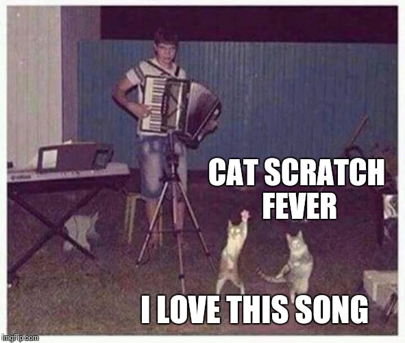 Getting jiggy with it | CAT SCRATCH FEVER I LOVE THIS SONG | image tagged in cat,cats,memes,meme,dancing | made w/ Imgflip meme maker