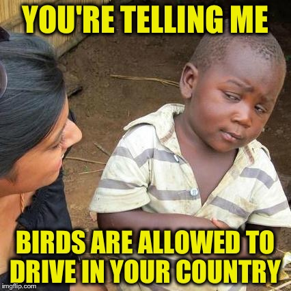 Third World Skeptical Kid Meme | YOU'RE TELLING ME BIRDS ARE ALLOWED TO DRIVE IN YOUR COUNTRY | image tagged in memes,third world skeptical kid | made w/ Imgflip meme maker