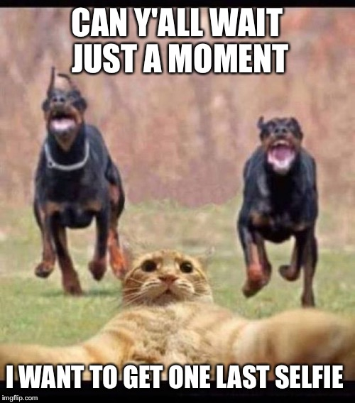 Dogs vs cats | CAN Y'ALL WAIT JUST A MOMENT I WANT TO GET ONE LAST SELFIE | image tagged in dogs,cats,selfie,hold on | made w/ Imgflip meme maker