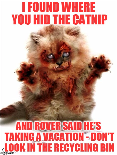 the fury of fur (thanks to DeedsterDoo for making me think of this disturbing idea) | I FOUND WHERE YOU HID THE CATNIP AND ROVER SAID HE'S TAKING A VACATION - DON'T LOOK IN THE RECYCLING BIN | image tagged in memes,cats,cat,catnip | made w/ Imgflip meme maker