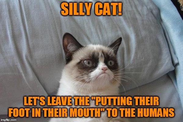 "SILLY CAT! LET'S LEAVE THE ""PUTTING THEIR FOOT IN THEIR MOUTH"" TO THE HUMANS 