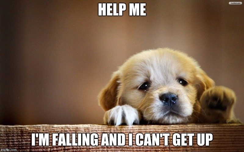 HELP ME I'M FALLING AND I CAN'T GET UP | image tagged in sad puppy | made w/ Imgflip meme maker