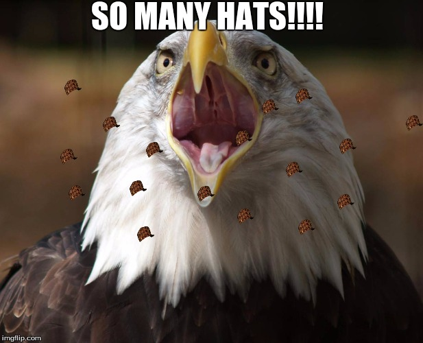 prt 4 | SO MANY HATS!!!! | image tagged in hawk | made w/ Imgflip meme maker