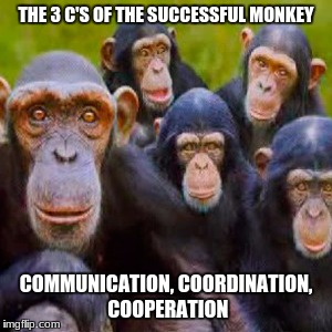 THE 3 C'S OF THE SUCCESSFUL MONKEY COMMUNICATION, COORDINATION, COOPERATION | image tagged in nodeadmonkeys | made w/ Imgflip meme maker