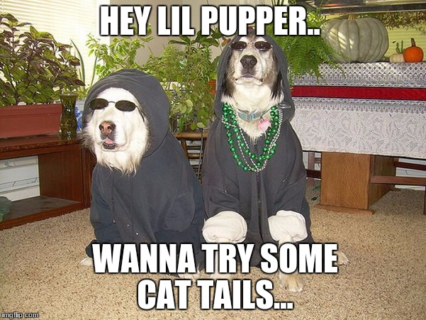 HEY LIL PUPPER.. WANNA TRY SOME CAT TAILS... | image tagged in hey man want some weed | made w/ Imgflip meme maker