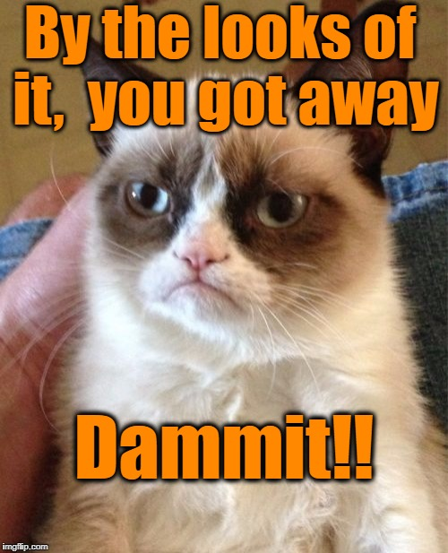 Grumpy Cat Meme | By the looks of it,  you got away Dammit!! | image tagged in memes,grumpy cat | made w/ Imgflip meme maker