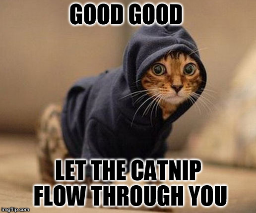 GOOD GOOD LET THE CATNIP FLOW THROUGH YOU | made w/ Imgflip meme maker