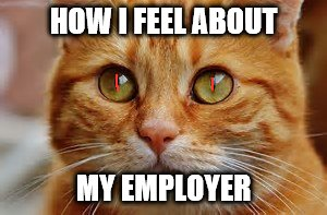 How I feel about my employer | HOW I FEEL ABOUT MY EMPLOYER | image tagged in nsfw,angry cat | made w/ Imgflip meme maker