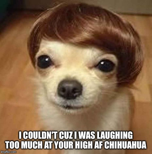 I COULDN'T CUZ I WAS LAUGHING TOO MUCH AT YOUR HIGH AF CHIHUAHUA | made w/ Imgflip meme maker