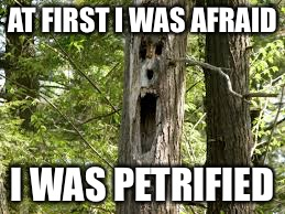 Scared Tree | AT FIRST I WAS AFRAID I WAS PETRIFIED | image tagged in memes,scared tree | made w/ Imgflip meme maker