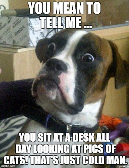 Funny Dog | YOU MEAN TO TELL ME ... YOU SIT AT A DESK ALL DAY LOOKING AT PICS OF CATS! THAT'S JUST COLD MAN. | image tagged in funny dog | made w/ Imgflip meme maker