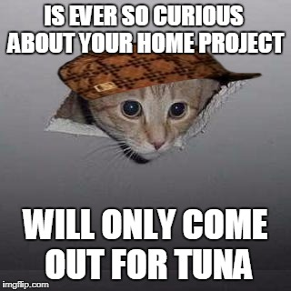 Ceiling Cat Meme | IS EVER SO CURIOUS ABOUT YOUR HOME PROJECT WILL ONLY COME OUT FOR TUNA | image tagged in memes,ceiling cat,scumbag | made w/ Imgflip meme maker