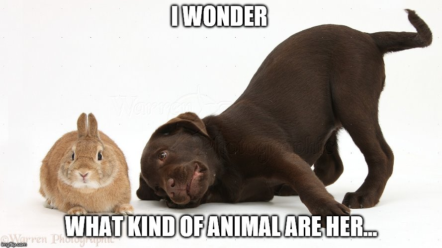 For the first time in forever | I WONDER WHAT KIND OF ANIMAL ARE HER... | image tagged in dog | made w/ Imgflip meme maker