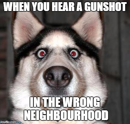 Scared Dog | WHEN YOU HEAR A GUNSHOT IN THE WRONG NEIGHBOURHOOD | image tagged in scared dog | made w/ Imgflip meme maker