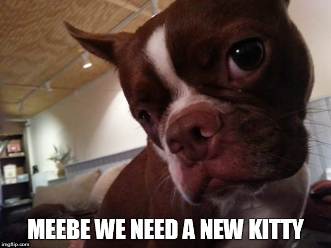 MEEBE WE NEED A NEW KITTY | made w/ Imgflip meme maker