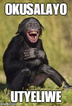 Laughing monkey | OKUSALAYO UTYELIWE | image tagged in laughing monkey | made w/ Imgflip meme maker
