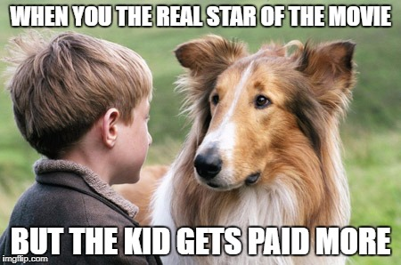 WHEN YOU THE REAL STAR OF THE MOVIE BUT THE KID GETS PAID MORE | image tagged in lassie and timmy | made w/ Imgflip meme maker