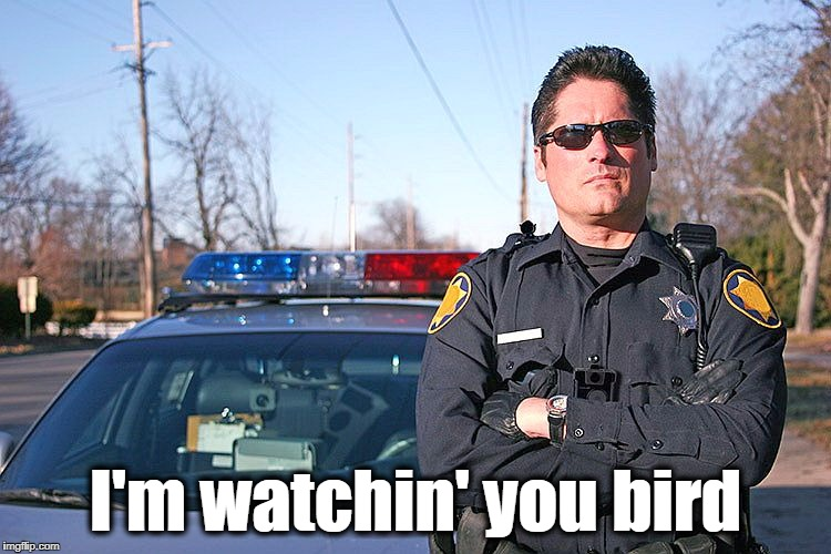 police | I'm watchin' you bird | image tagged in police | made w/ Imgflip meme maker