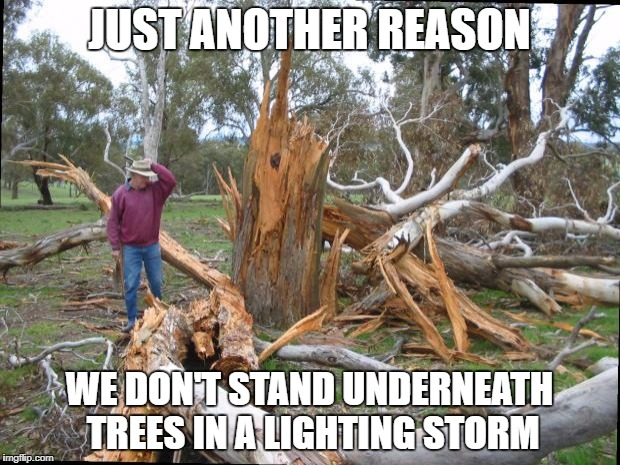 tree lighting | JUST ANOTHER REASON WE DON'T STAND UNDERNEATH TREES IN A LIGHTING STORM | image tagged in tree lighting | made w/ Imgflip meme maker