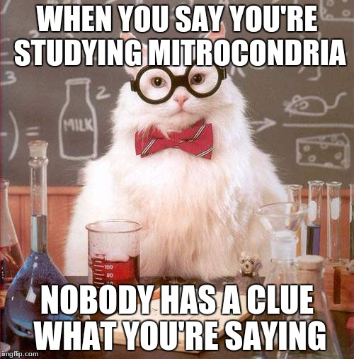 Science Cat | WHEN YOU SAY YOU'RE STUDYING MITROCONDRIA NOBODY HAS A CLUE WHAT YOU'RE SAYING | image tagged in science cat | made w/ Imgflip meme maker