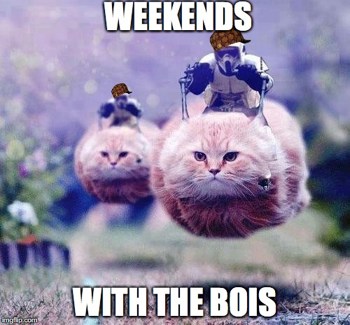 star wars cats | WEEKENDS WITH THE BOIS | image tagged in star wars cats,scumbag,memes | made w/ Imgflip meme maker
