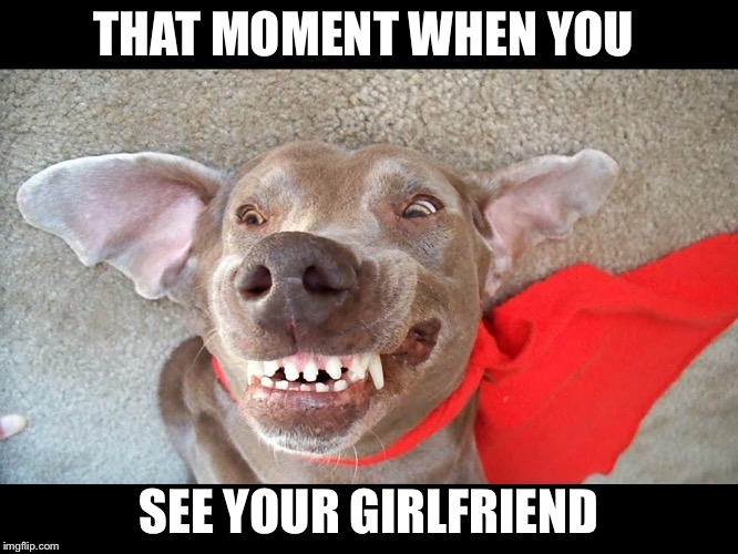 Ugly dog | THAT MOMENT WHEN YOU SEE YOUR GIRLFRIEND | image tagged in dog | made w/ Imgflip meme maker
