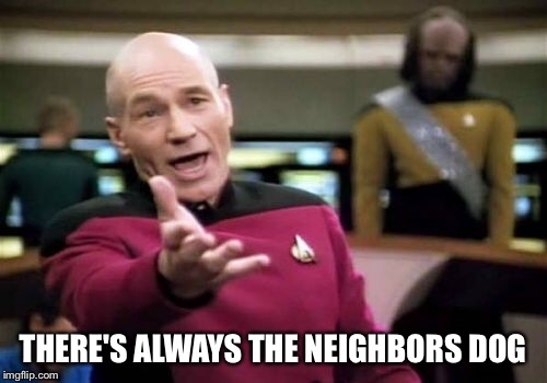 Picard Wtf Meme | THERE'S ALWAYS THE NEIGHBORS DOG | image tagged in memes,picard wtf | made w/ Imgflip meme maker